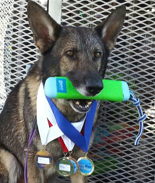 2015.8.5 Winnebago County Fair Dock Dogs (5).jpg