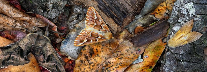 Moth Mural