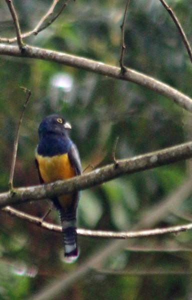 BIRDS  --  13 species