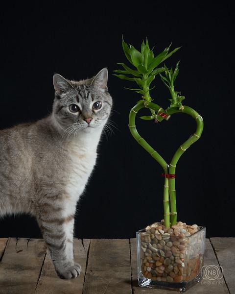 CatsBamboo3.jpg