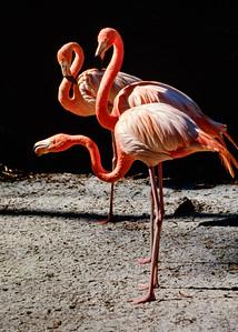 Florida Everglades and Okefenokee Swamp - 1980