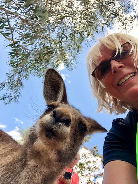 BONORONG WILDLIFE PARK, TASMANIA, AUSTRALIA - 2019
