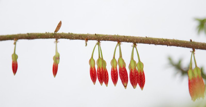 Hanging Red Flowers