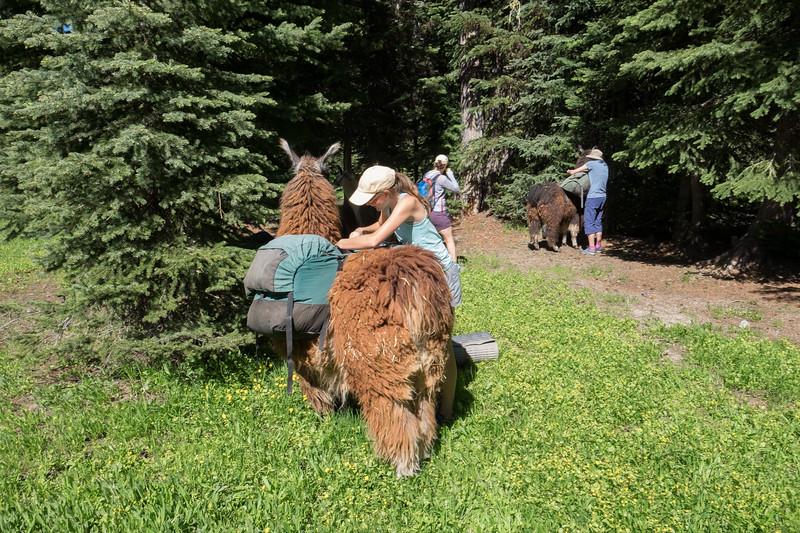 Jay Waltmunson Photography - Wallowa Llamas Reunion - 096.jpg