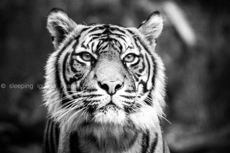 wildlife-1.jpg