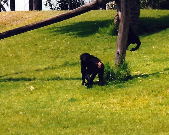 1998  San Diego Wild animal park