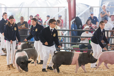 2019 OC FAIR SWINE SHOWMANSHIP