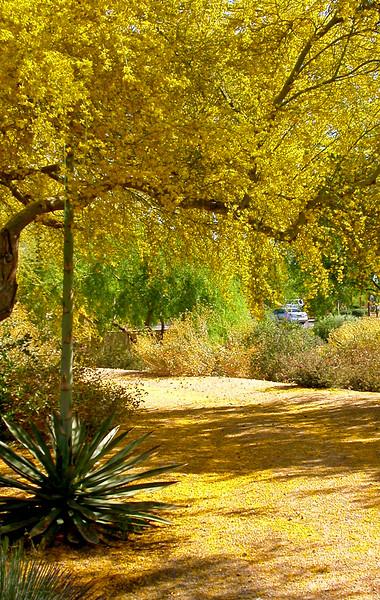 Sedona Arizona 393 edited.jpg