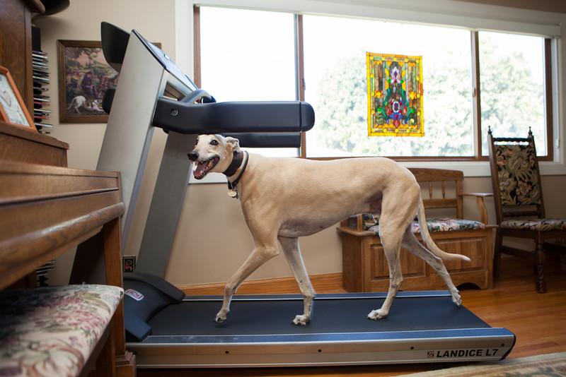 Duncan, the greyhound