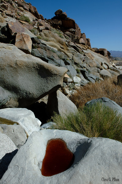 Grapevine Canyon - Red algae grow in the water that this stone basin collected.