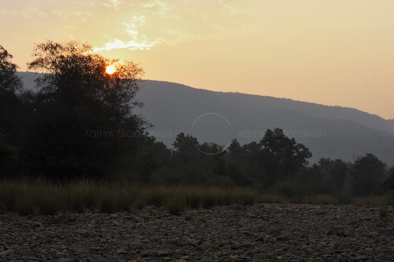 The forests of Ranthambhore at dawn in winters