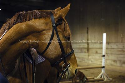 018-horse-madison_co-19apr05-0204