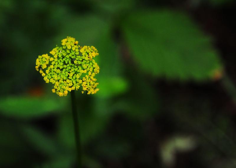 NEA_3046-7x5-Flower.jpg