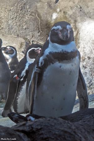 2009 zoo 10-09