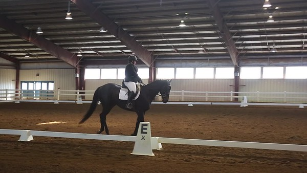 2019 VHT International Horse Trial