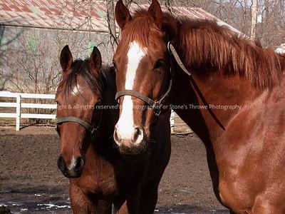 016-horses-dsm-04feb05-7302