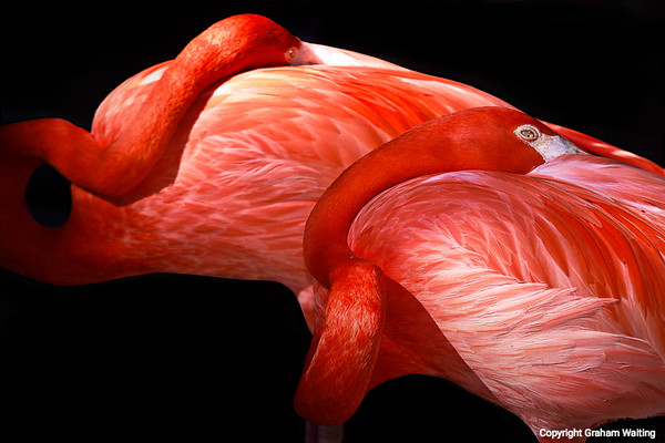 RED FLAMINGOS_BEST IN SHOW AWARD AT BOSTON CITY HALL APRIL 2012