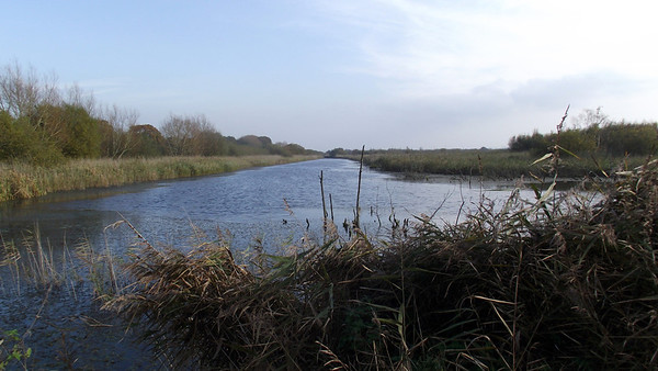 Shapwick National Nature Reserve Sommerset