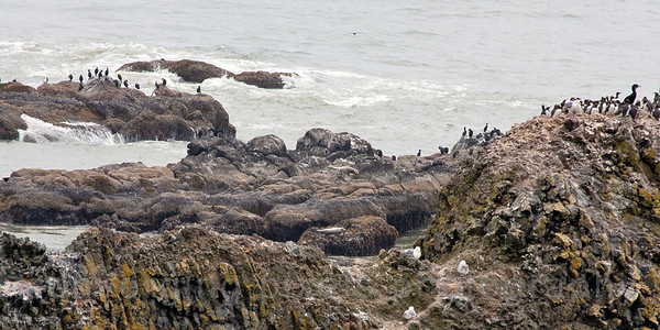 The wild life is plentiful: seals, birds, penquins... quite a sight to see. Newport beach. 8992