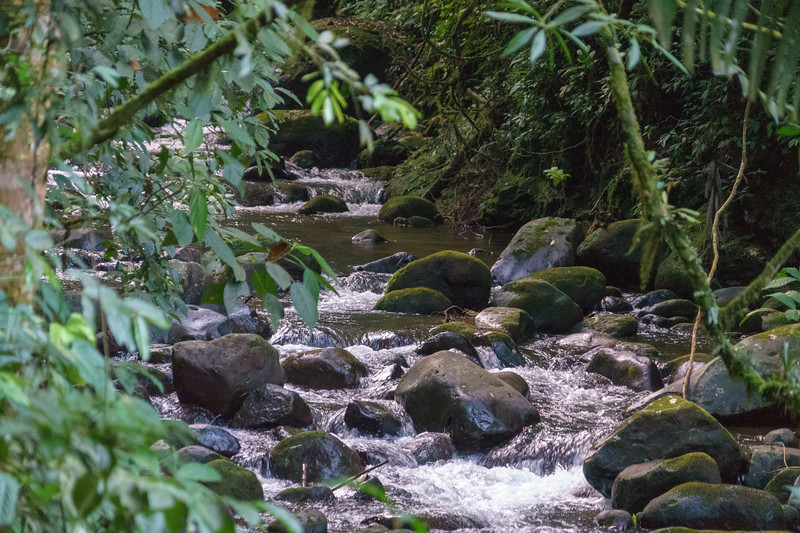 Costa Rica 2015-1893.jpg