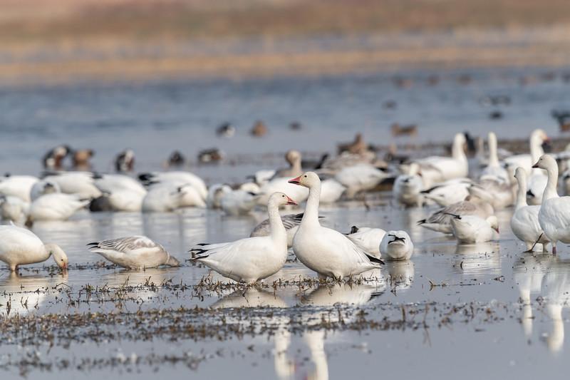 Merced National Wildlife Refuge - Merced, CA USA