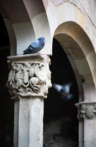 Doves on the Gothic columns of the former Saint Cross Hospital (Hospital de la Santa Creu), now Library of Catalonia, town of Barcelona, autonomous commnunity of Catalonia, northeastern Spain