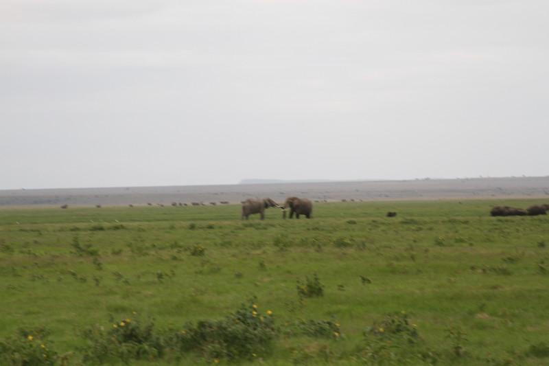 Kenya 2019 #2 1535.JPG