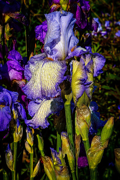 OUR IRISES-2016-0614-Edit.jpg