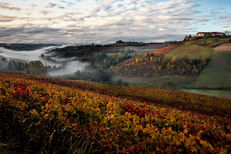 LANGHE_073_1010@ANDREAFEDERICIPHOTO.jpg