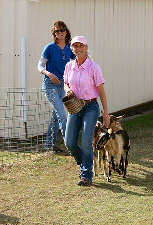 AKC Herding Trial Nov 17 2013