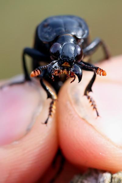 Beetle 5.1.jpg