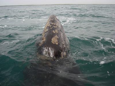 2009 Baja