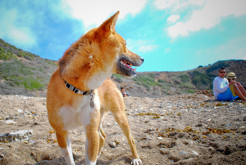 dogs_beach-086.jpg