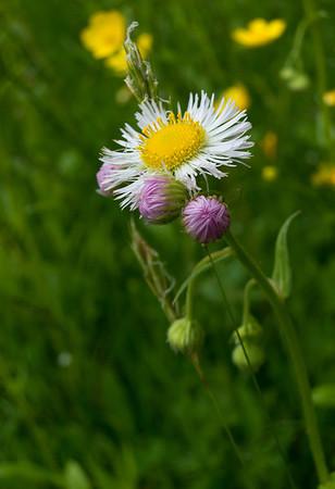 Thatcher Park Spring Wild Flowers 2013