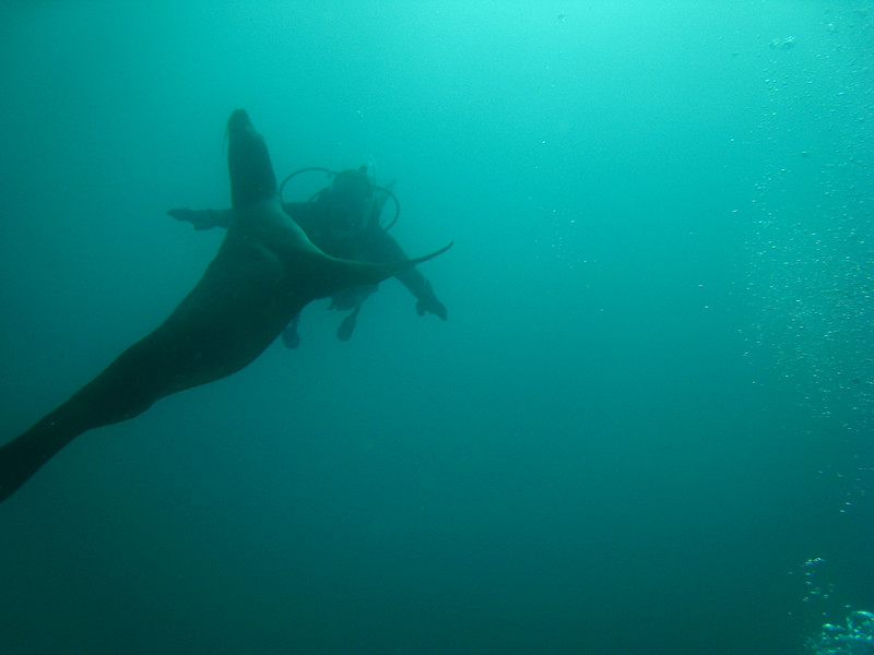 Diving in the Galapagos (119 of 392)