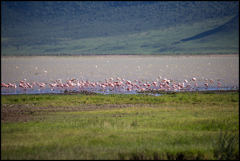 Flamingos, Ngorongoro Conservation Area