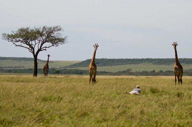 Andy - Giraffes 2 - VW.jpg