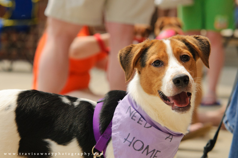 20110514 PetSmart Adoption Event-10.jpg