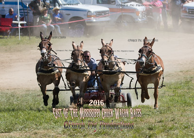 2016 East of The Mississippi Chuckwagon Races,  Saturday 4 Up Mules