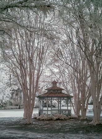 Kanapaha Botanical Gardens, Gainesville, Florida