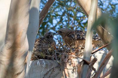 2013 Nesting