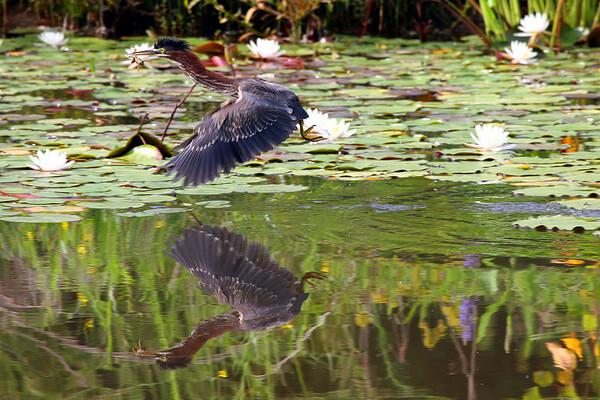 2007 Possible Audubon Donation Photos