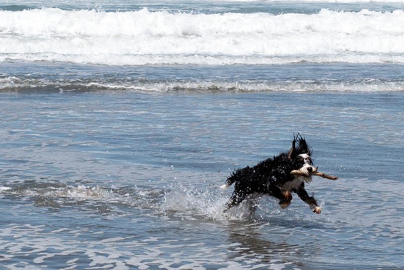 ocean beach quarantine 1185155-17-20.jpg