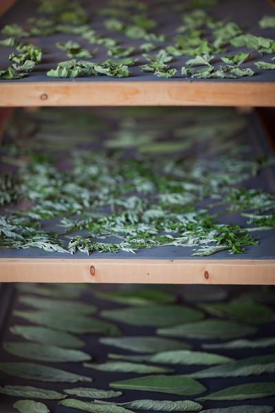 Edible Hudson Valley Magazine shoot on women herbalists.