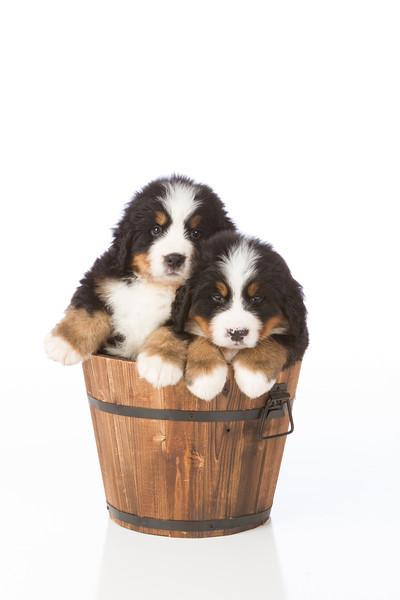2013-Pearson Pups-Jun02-0450.jpg