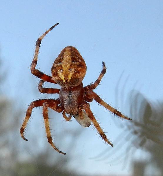 over the door spider eating best.jpg