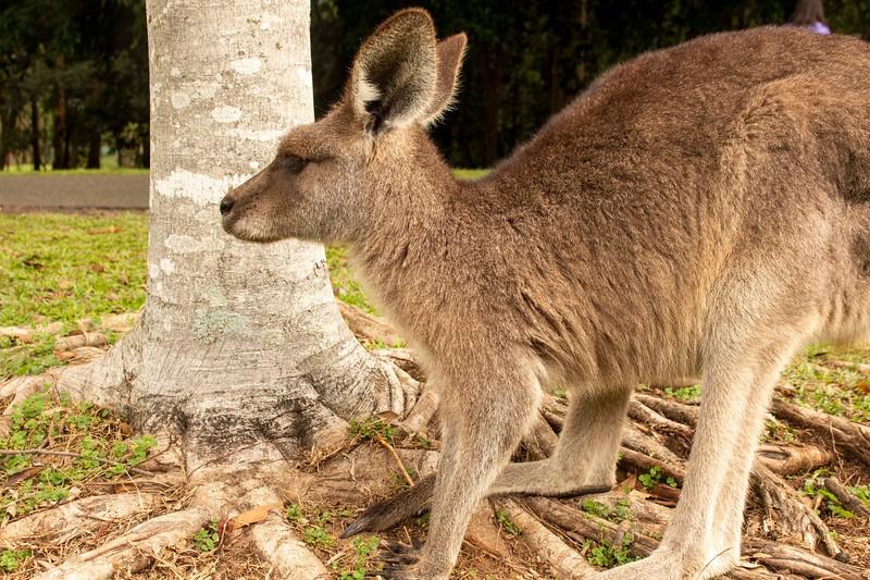 Australia_184.jpg