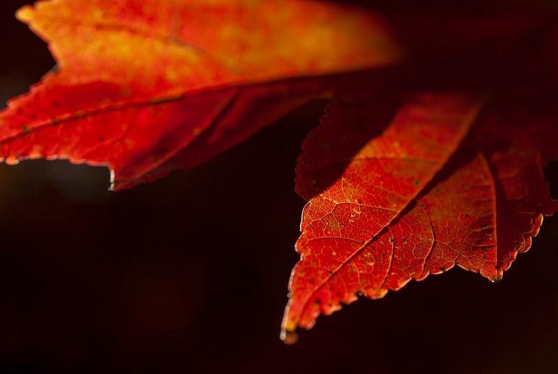 leavesdone-910.jpg