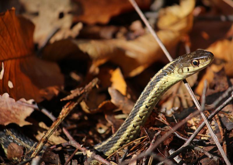snake woods 2014.jpg