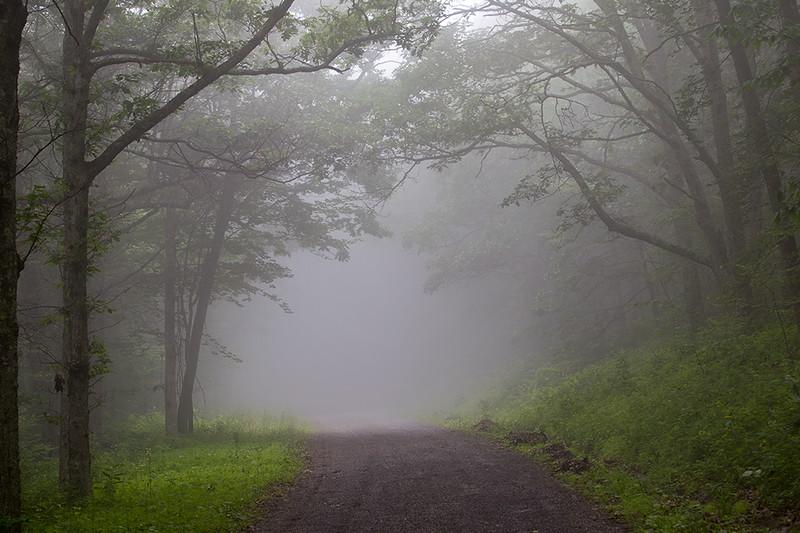 into-the-mist_19487011831_o.jpg